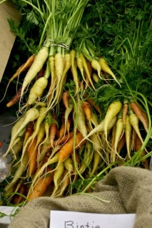 carrots_at_local_roots_market