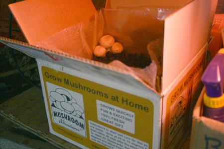 mushroom_growing_kit