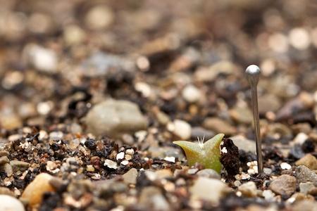 tiny_cactus