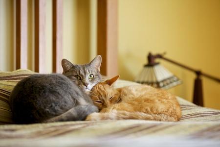 Sedating a cat with gravol 50