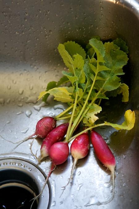 freshly picked radishes