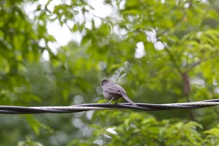 birds in the garden 1