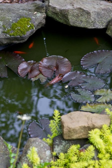 pond garden 2