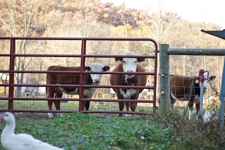 beths farm 2
