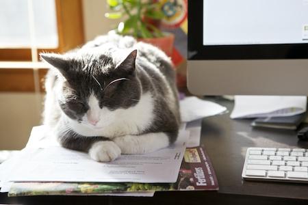 Desk cat 1