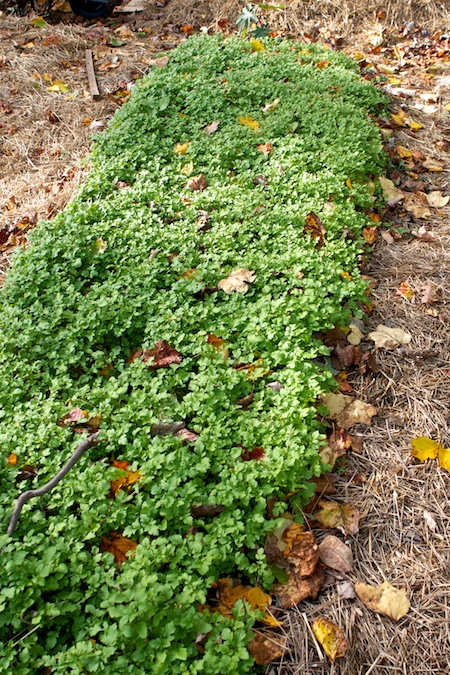 cover crops 2
