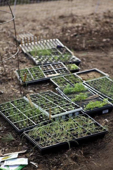 hardening off seedlings 2