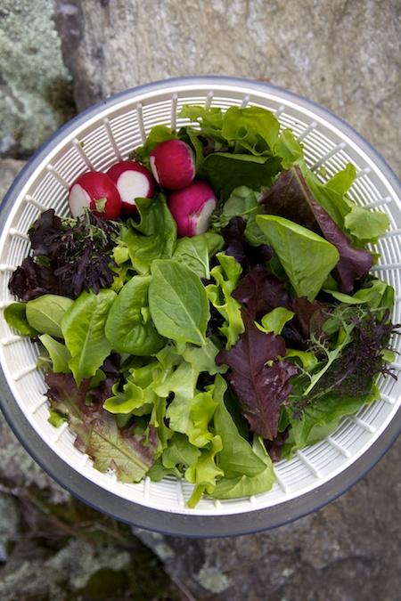 growing food 1