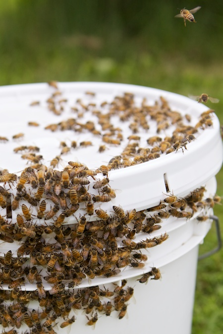 catching a swarm 4