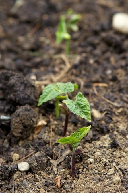 Seedlings 4