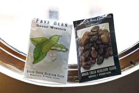 broad beans 1