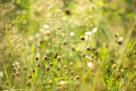 the meadow 3