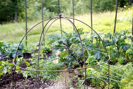 vegetable gardens 3