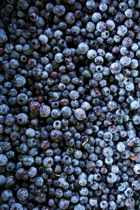 Wild Blueberries 1