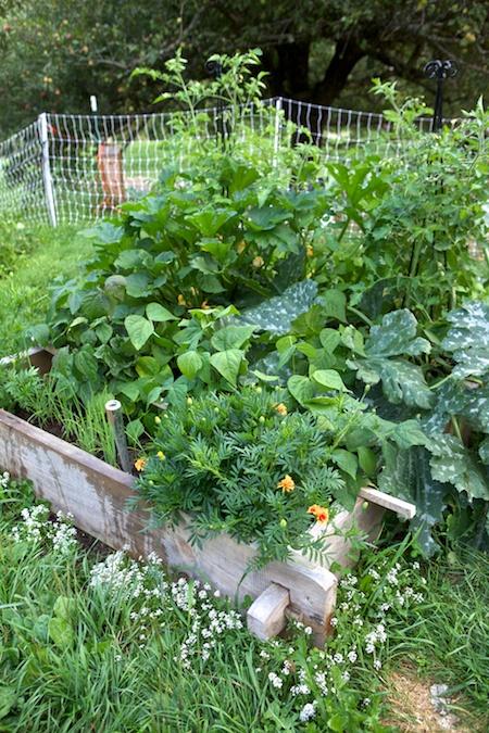 5x5 Challenge Garden in August