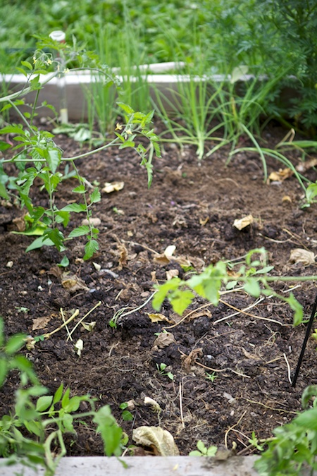 5x5 garden 1