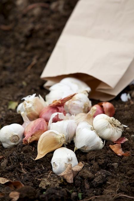 garlic combo Giveaway 1