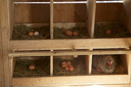 Nesting Boxes