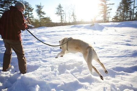 Tara in Snow 3