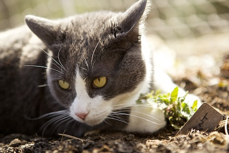 catmint 2