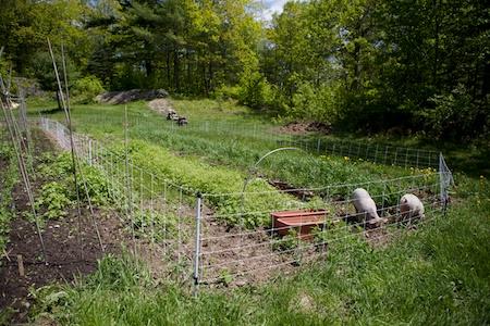 back garden (1)