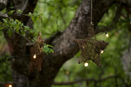 stars in tree 1
