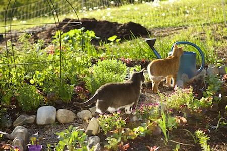 gardening with cats 2