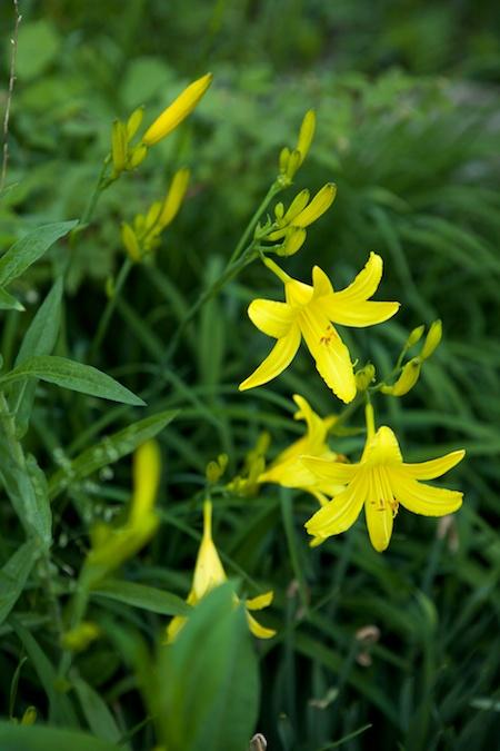 spring flowers 12