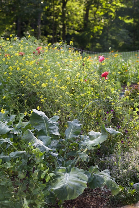 potager in bloom 5