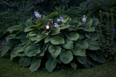 mclaughlin garden illuminated 2