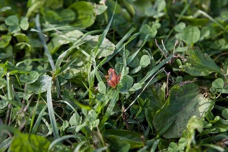 tiny toad 2