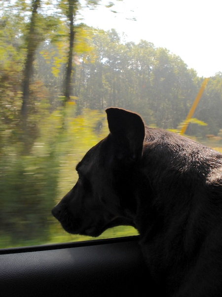 lucy in the car (2)