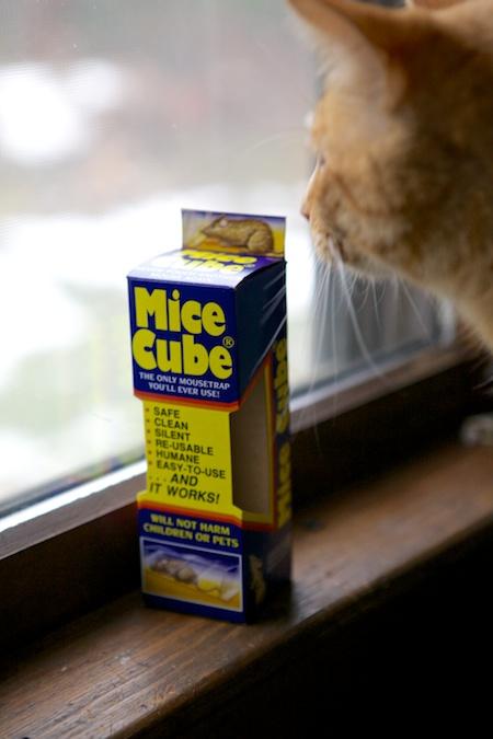 mice cube 1