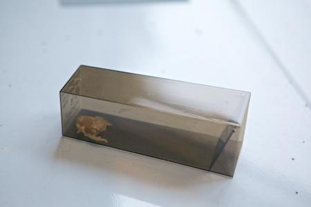 mice cube 2