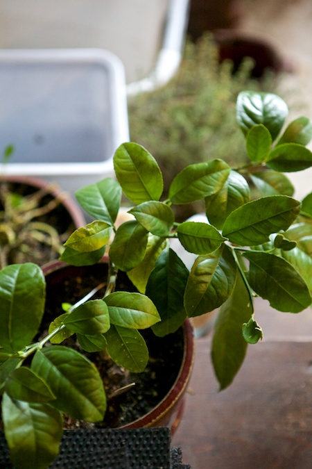 overwintered potted plants 2
