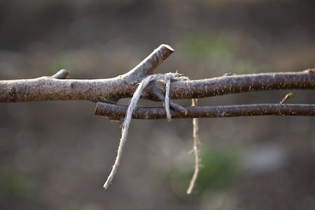 sapling trellis 1