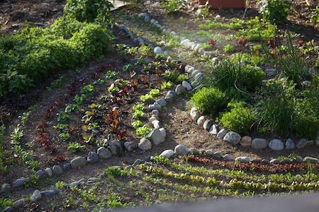 Potager with curved rows 2