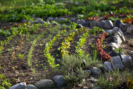 Potager with curved rows 4