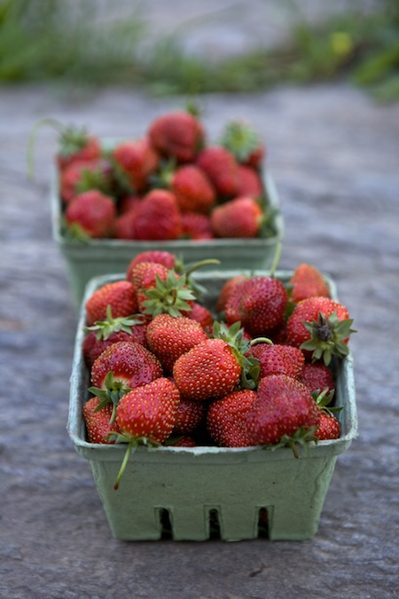 Picking Strawberries 1