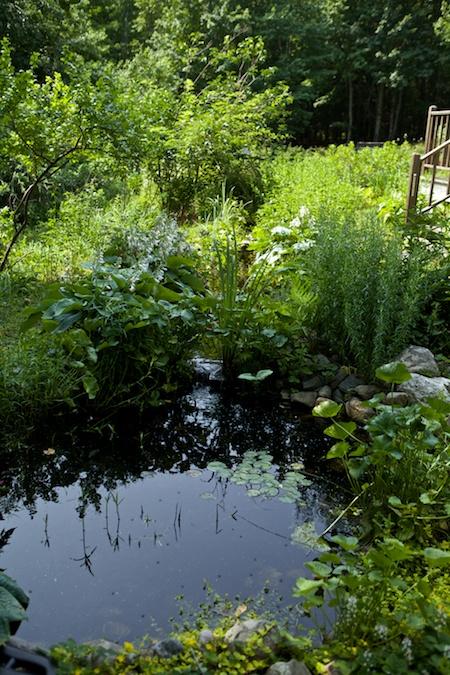 belfast garden tour 6