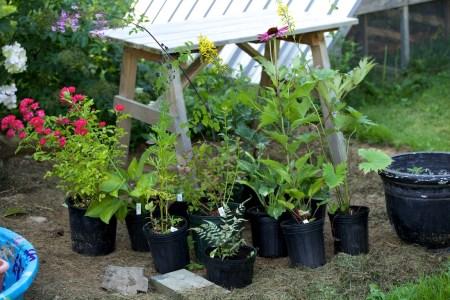 new plants from hidden gardens 1
