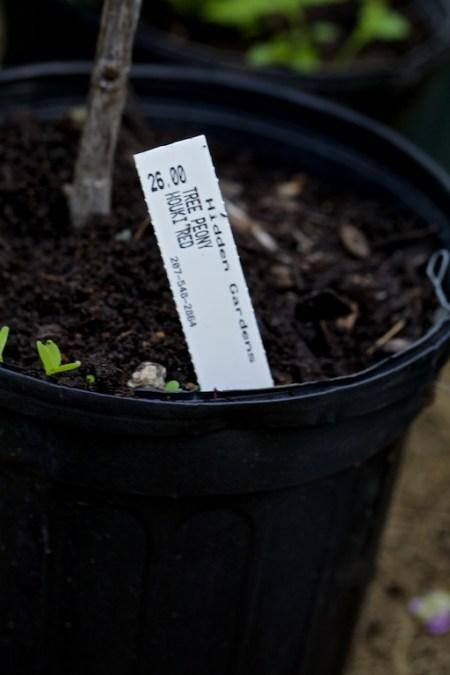 new plants from hidden gardens 10