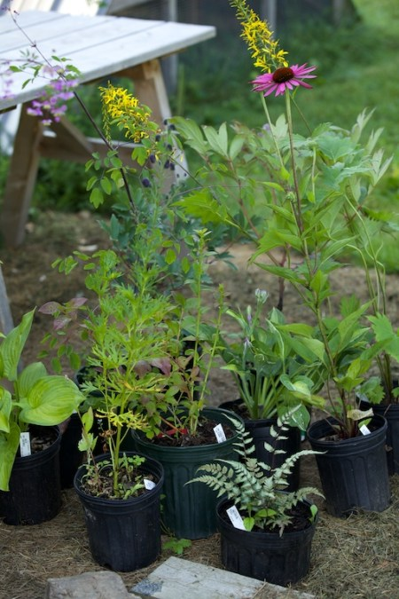 new plants from hidden gardens 2