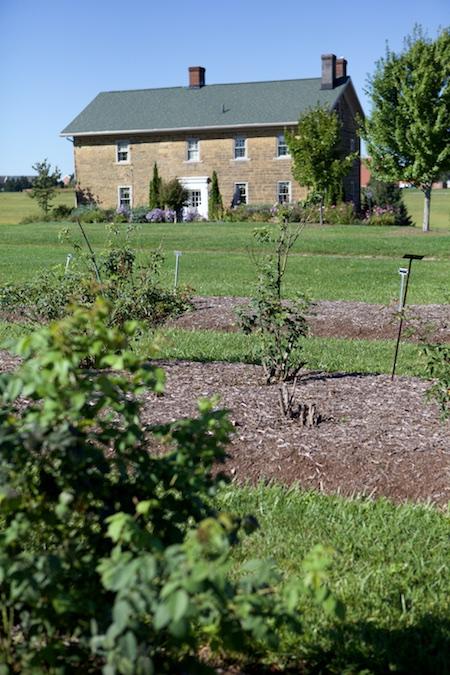 Secrest Arboretum 1
