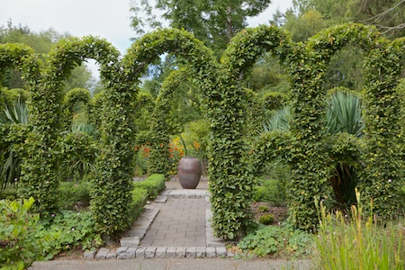 Herronswood hedge garden 3