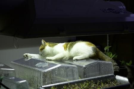 cat under grow light 2