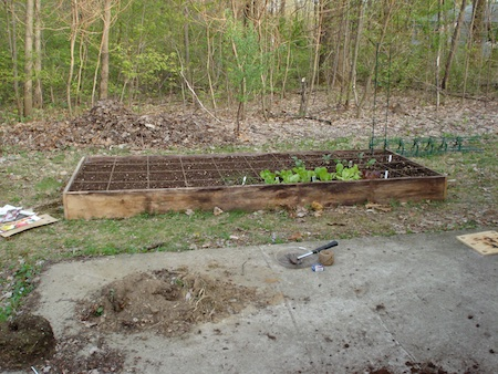 raised beds 1