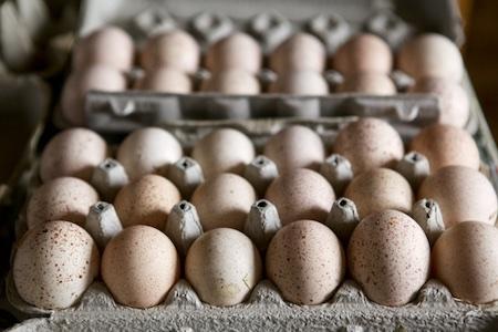 turkey eggs 2