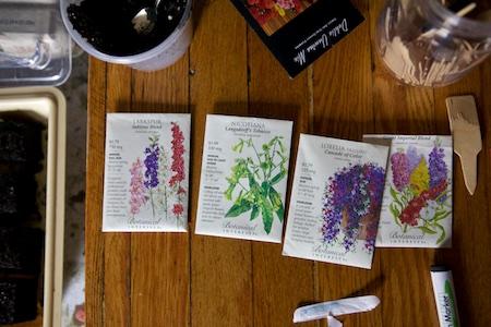 starting seeds 2