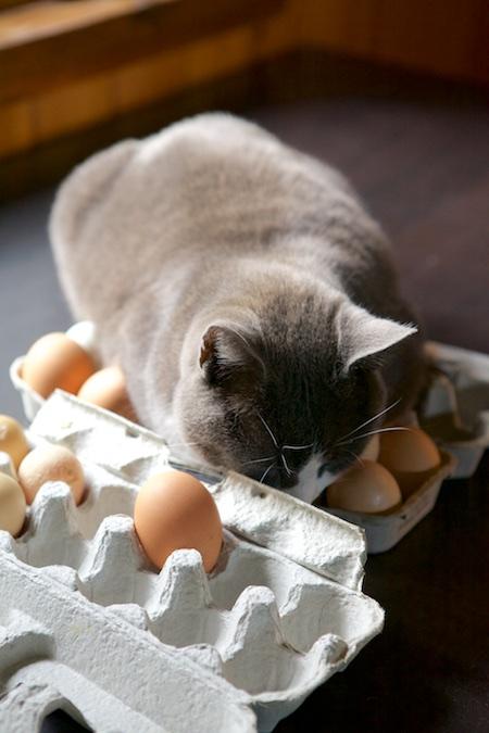 broody cat 2